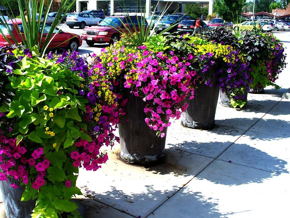 Rock Planters With Beautiful Plants And Flowers Perfect To Mix