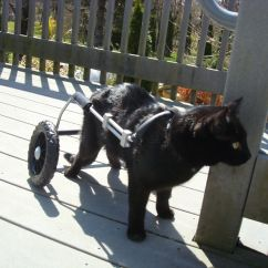 Wheelchair For Cats Circle Comfy Chairs Sneaking Around In His Cat From Eddie 39s Wheels