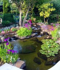 18 Lovely Ponds And Water Gardens For Your Backyard ...