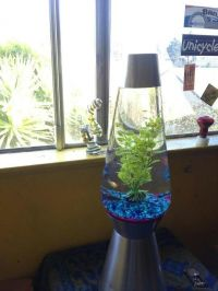 Turn your lava lamp into a fishtank   DIY projects ...