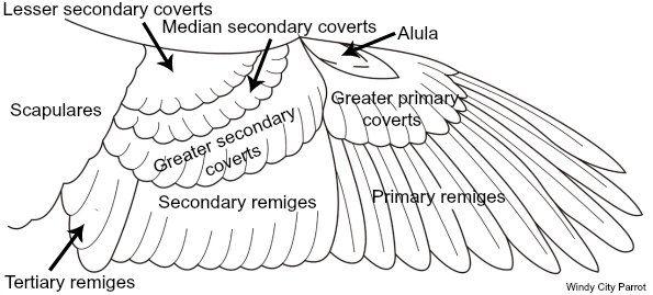 Mechanics of Your Bird's Wondrous Wings