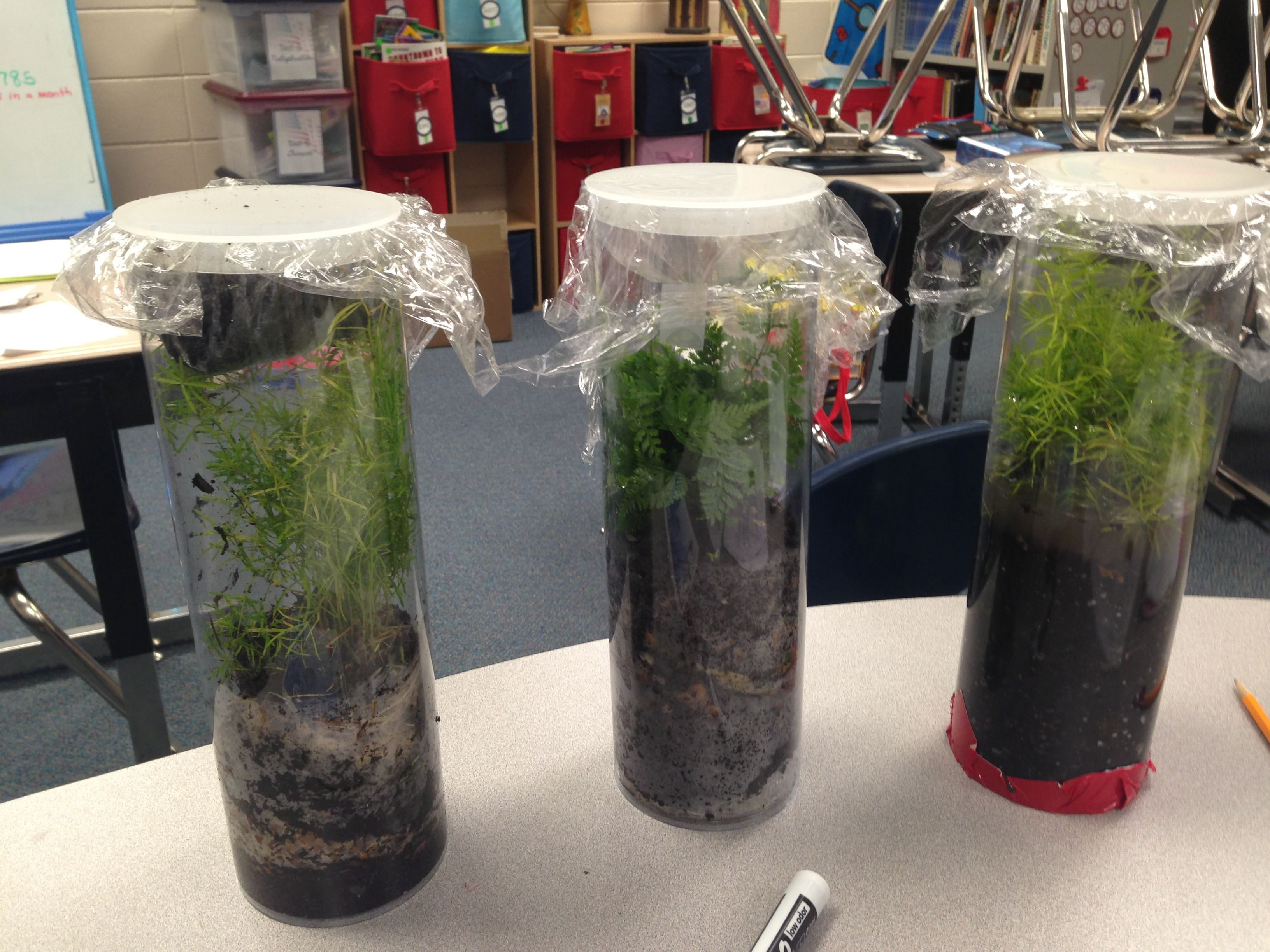 Stem Build A Terrarium Engineering Design Process