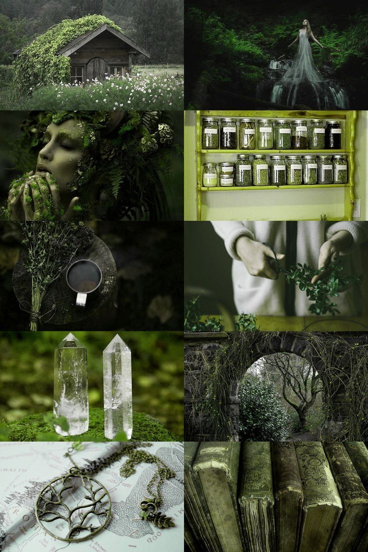 Primrose background on green by ruth black for stocksy united flower background wallpaper,. green witch/virgo aesthetic (requested) more here