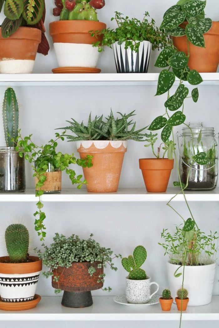 99 Great Ideas To Display Houseplants Plants House And Houseplants