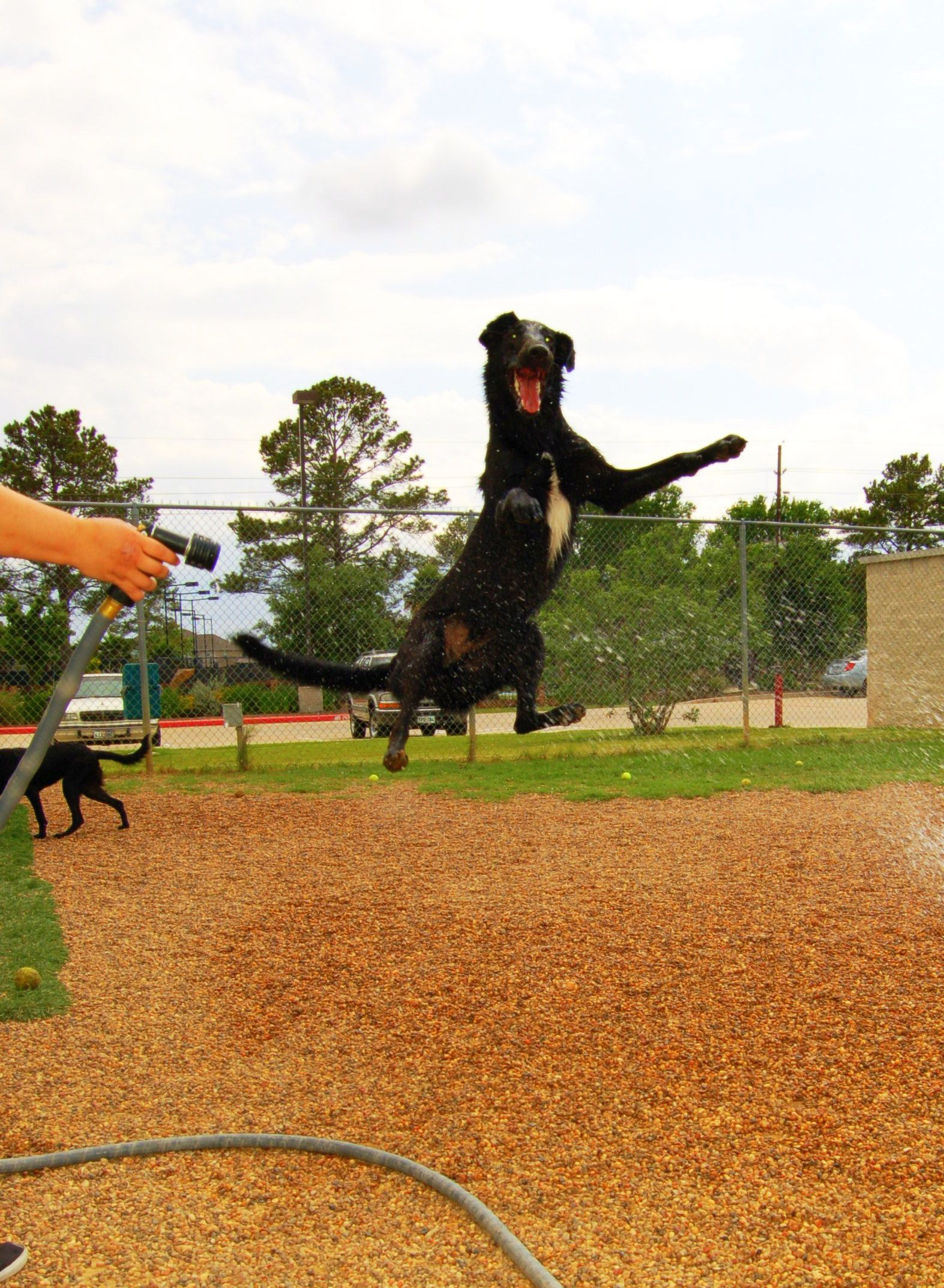 Doggie Daycare at Rover Oaks Pet Resort in Houston Texas