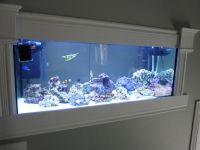 Wall Mounted Reef Aquarium | Aquarium Ideas | Pinterest ...