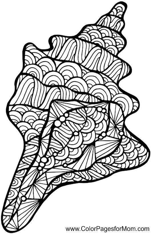Conchas Para Colorear. Haz Click En Concha De Nautilo