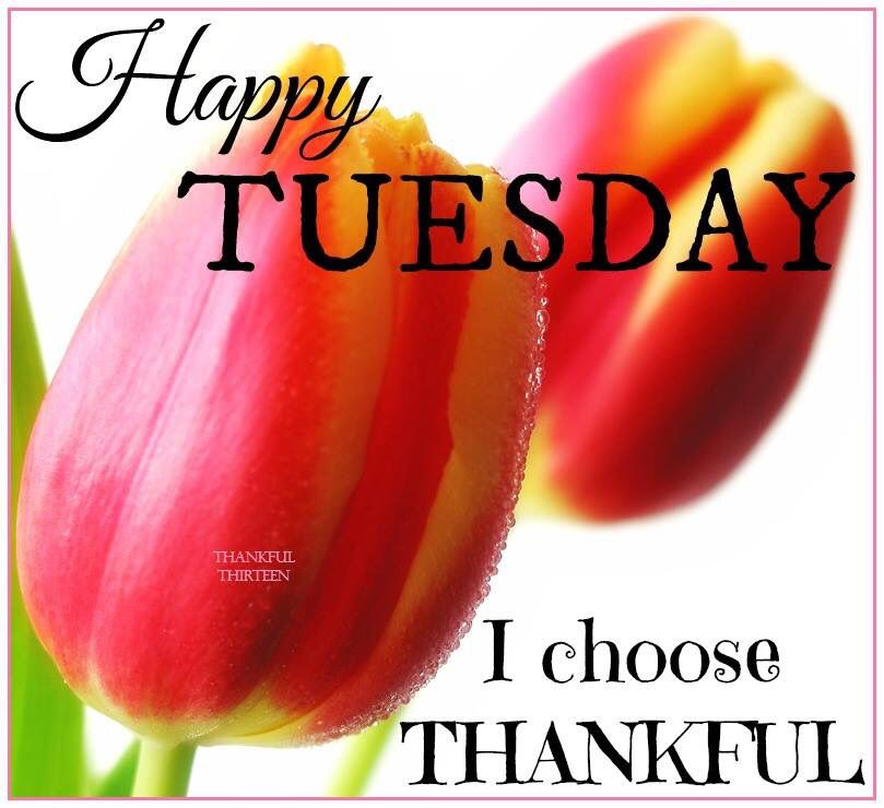 Happy Tuesday I Choose Thankful Pictures Photos And Images For Facebook Tumblr Pinterest