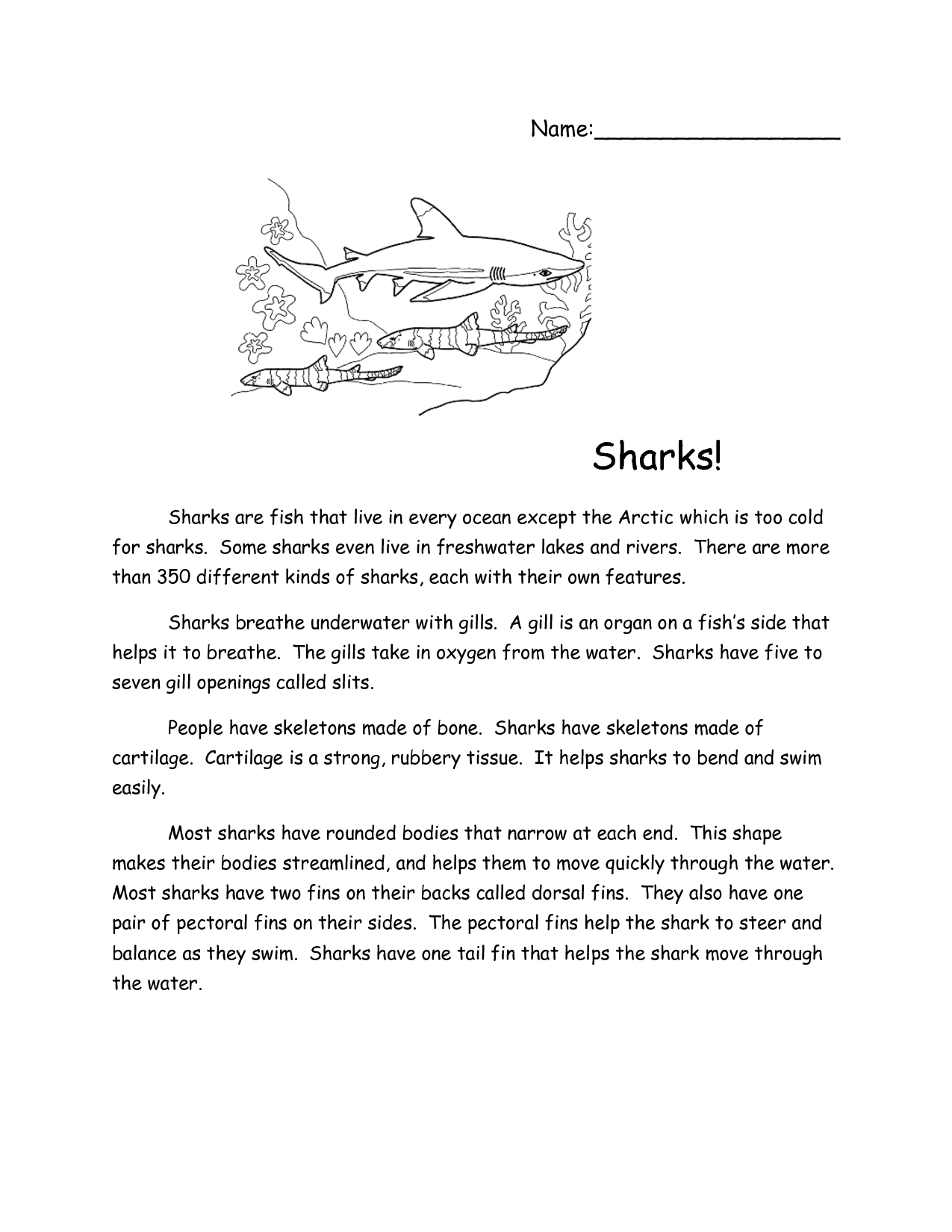 Sharks Reading Comprehension Passage