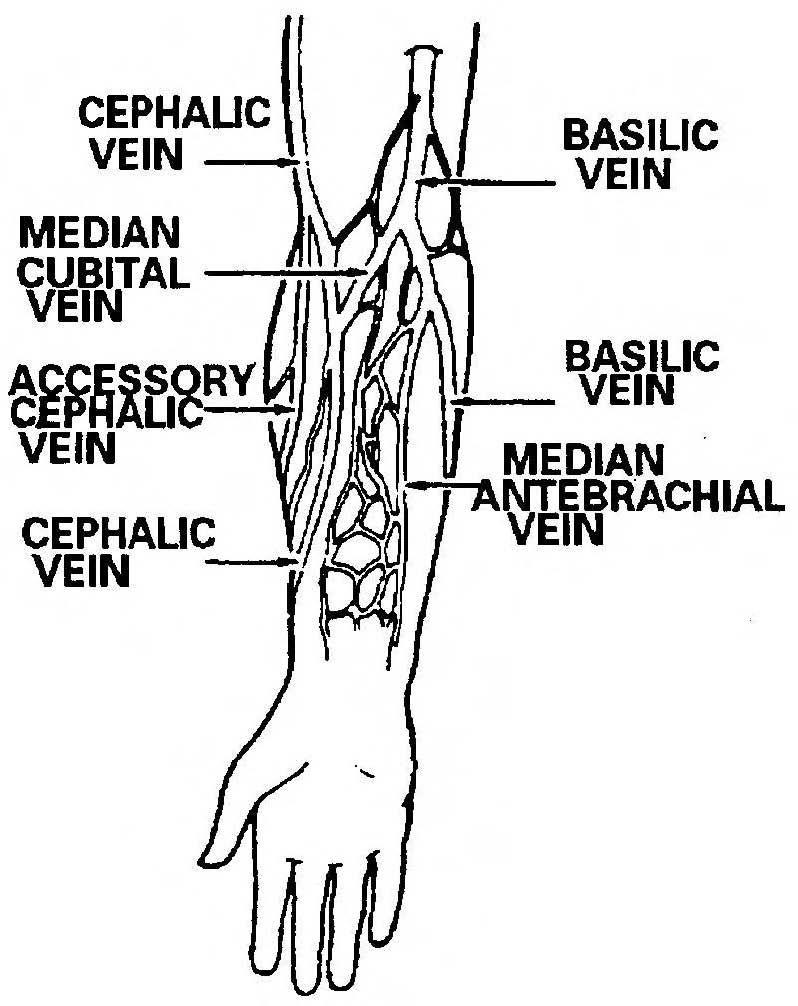 vein diagram with 3