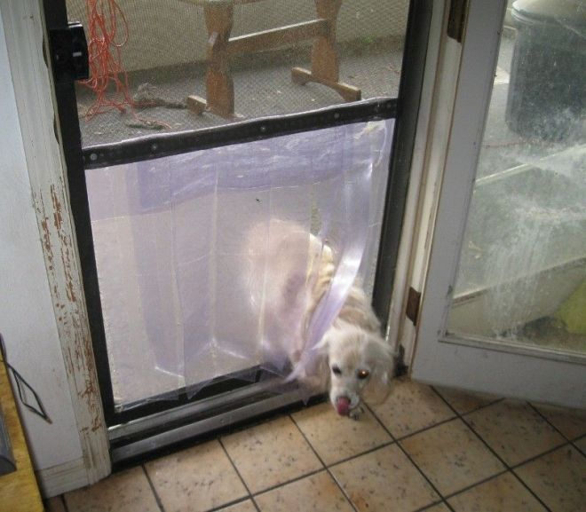 Easy inexpensive doggy door in a screen door florida