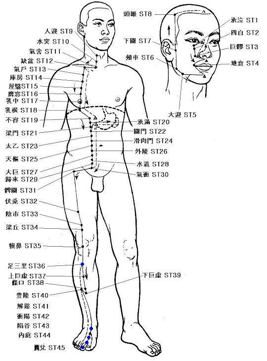 The Stomach meridian is a yang meridian and paired with
