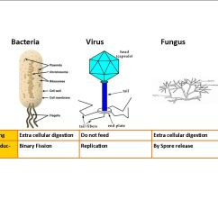 Fungus Cell Diagram Labeled Hydraulic Jack Parts Bacteria V Virus Sxsw Game Pinterest