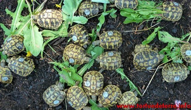 Turtle Man Animals All Around Him