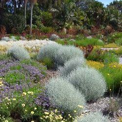 Australian Native Gardens Ideas Google Search Frontyard Plants