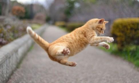 猫ジャンプ