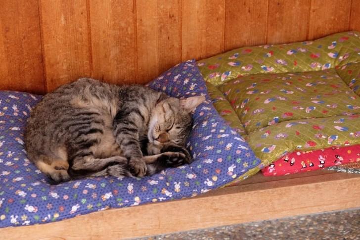 休憩所猫1