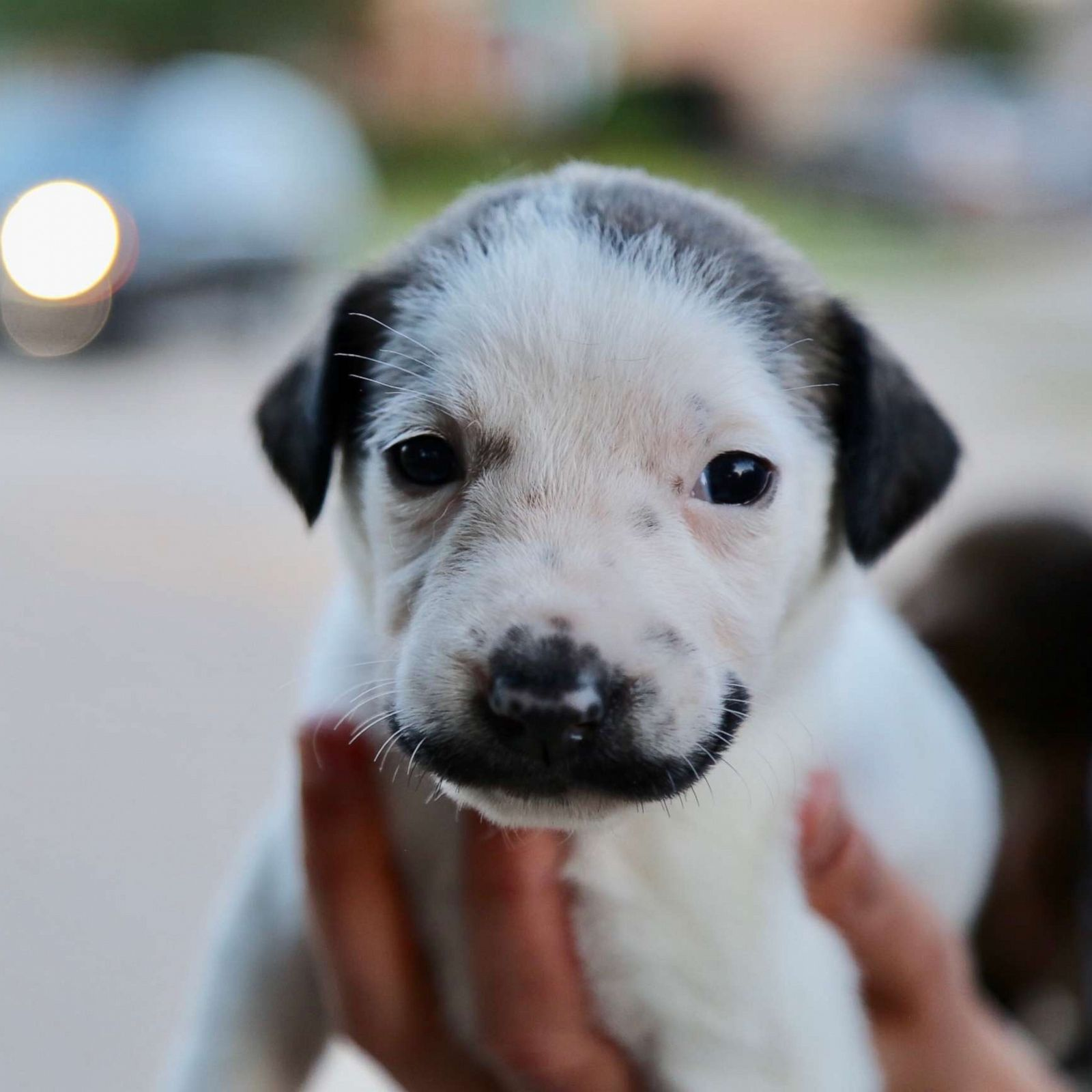 this adorable puppy with