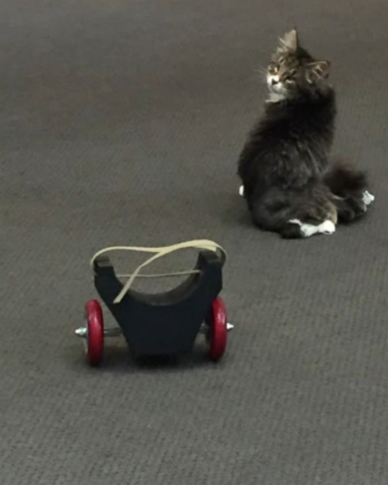 wheelchair for cats non slip chair protectors students design 3 d printed wheelchairs kitten with spinal condition abc news