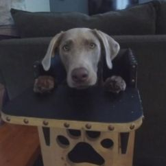 Dog High Chair Pedicure Chairs Package Deals With Rare Condition Eats Meals In Special Highchair Video Abc News