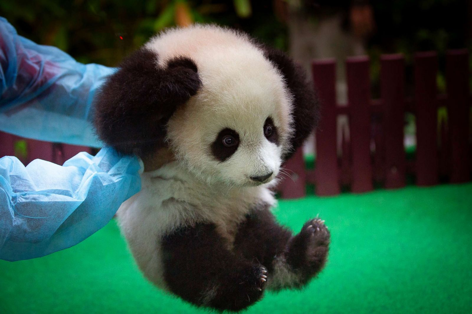 cutest baby animals from