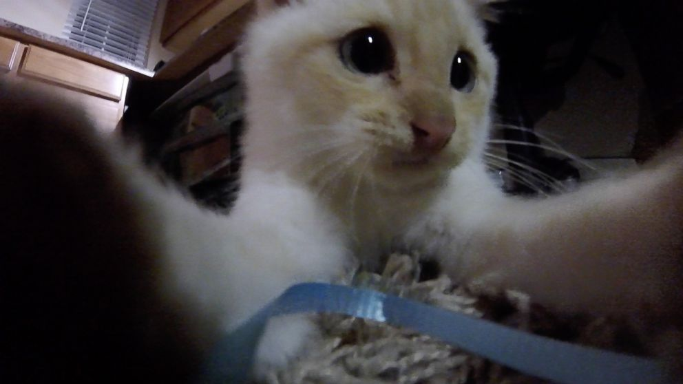 Utah Family Brings Life Back To A Kitten Found Frozen In The Snow Abc News