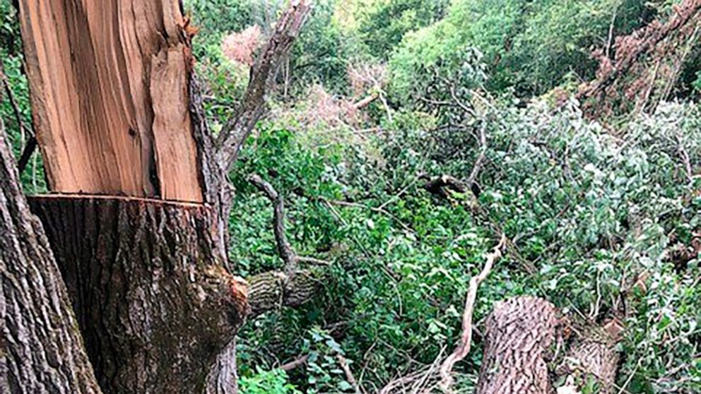 Minnesota man rescued after 4 days trapped under fallen tree thumbnail
