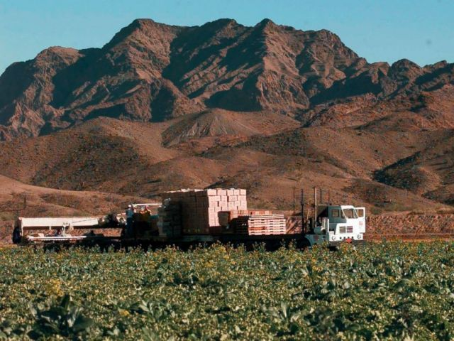 This Dec. 17, 1997, file photo, lettuce is harvested at a farm in Wellton, Ariz., east of Yuma. The Centers for Disease Control is expanding a warning about contaminated lettuce from Arizona that has now sickened dozens of people in several states.