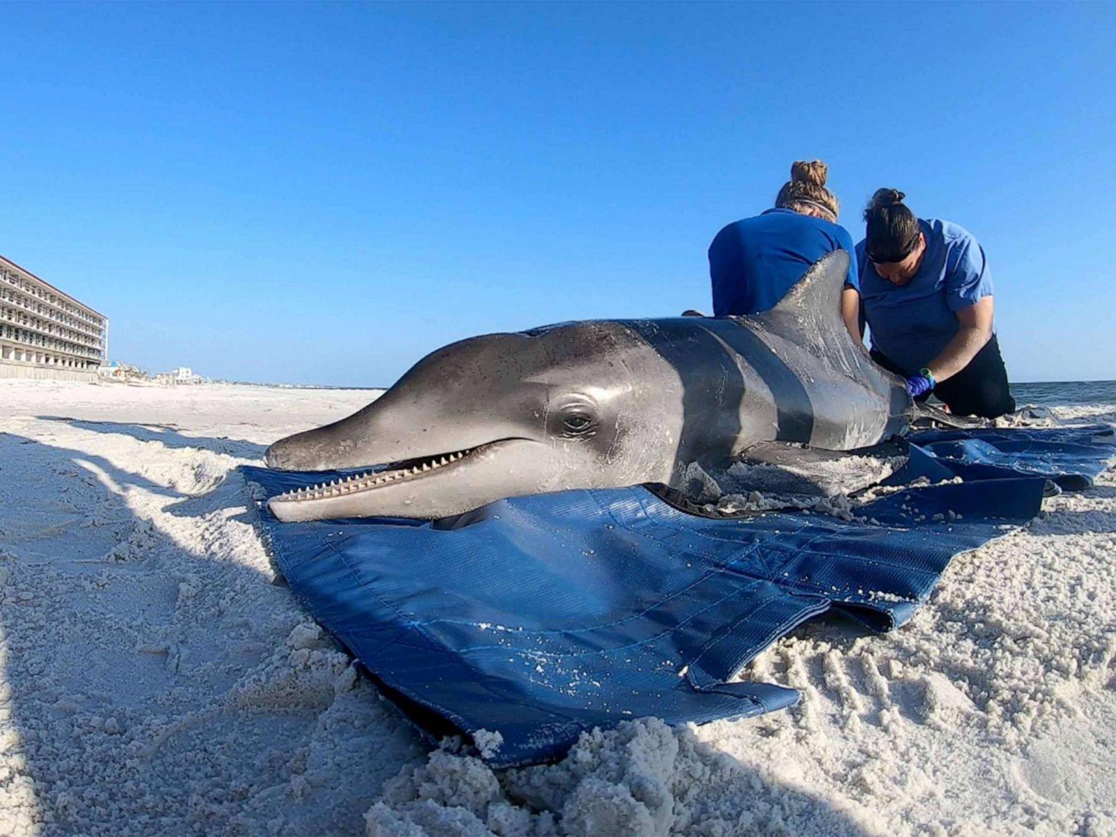 261 bottlenose dolphins have