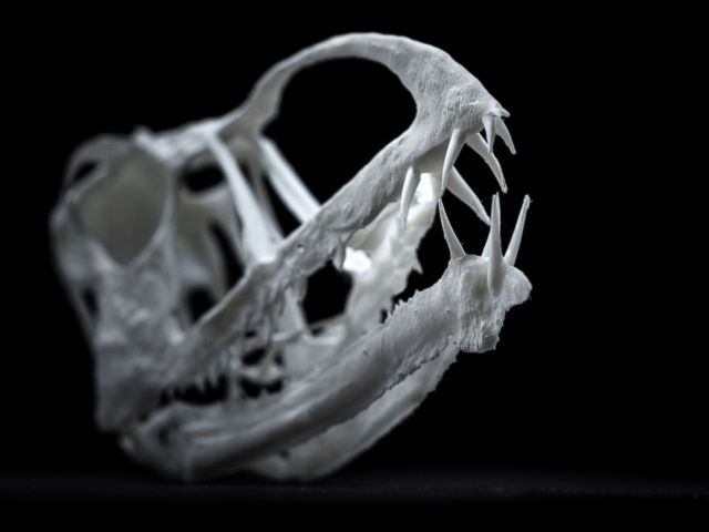PHOTO: A 3D printed model of Pterosauria Skull.