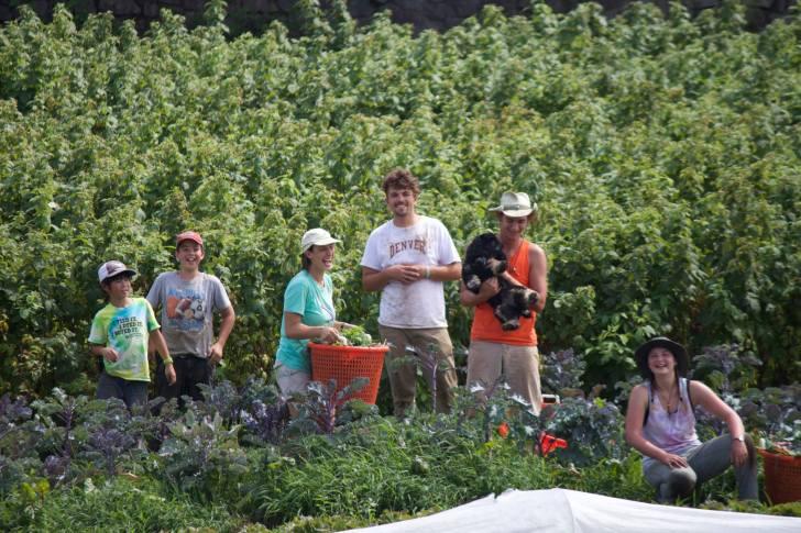 スタッフやボランティアの大人たちに混じって働く鷹之介君(左端)=ライトロック農場で