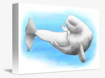 Free Beluga Whale Clip Art with No Background ClipartKey