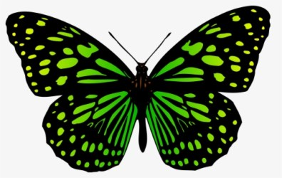 Butterfly Black And White Simple Butterfly Clipart Black And White Clip Art Of Butterfly Free Transparent Clipart ClipartKey