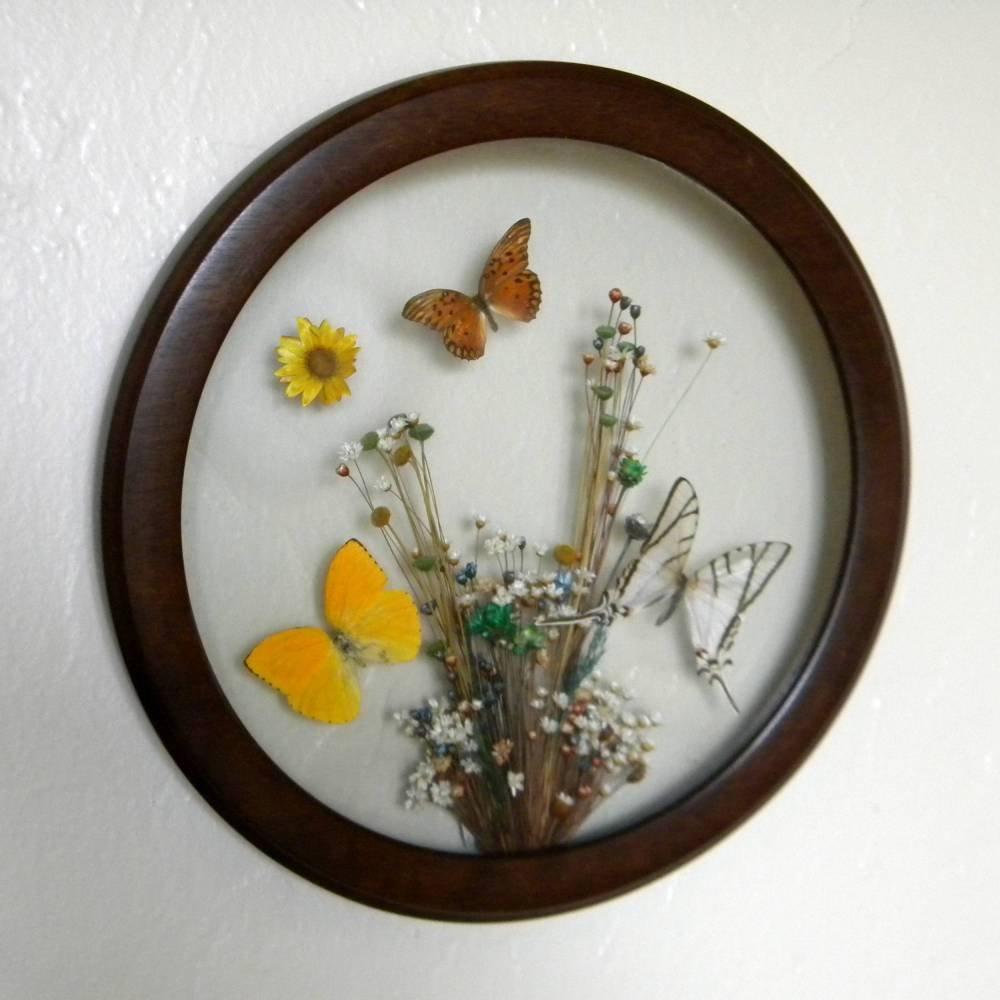 Rainbow Wall for framed butterflies
