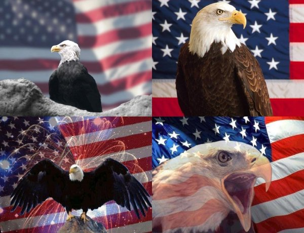 Patriotic Eagle Panel Fabric