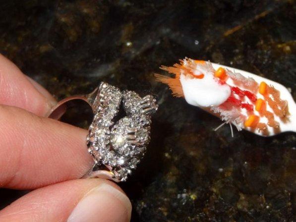 Необычные возможности обычной зубной пасты возможности, зубная паста