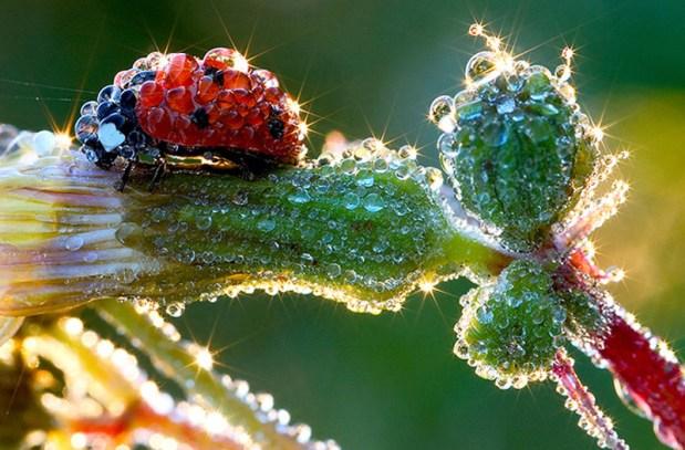 Снимки, которые доказывают, что нет лучшего художника, чем природа природа, фото