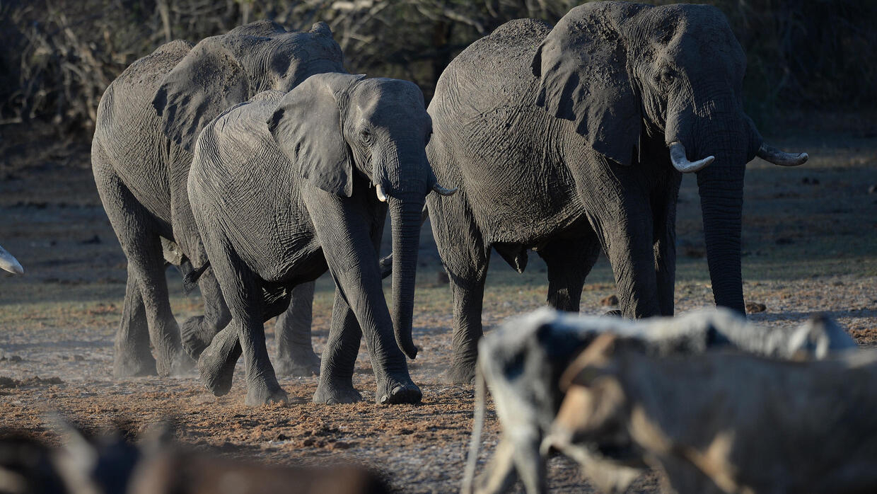 Botswana to Start Issuing Trophy Hunting Licenses in December