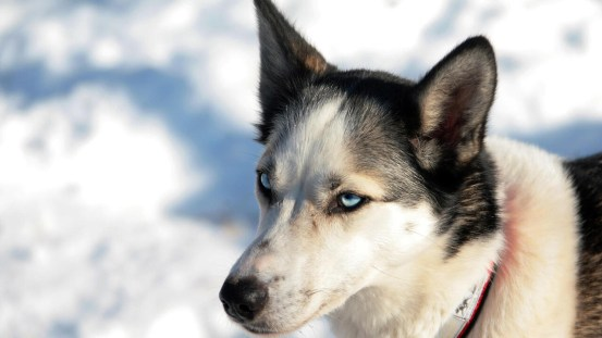 Dogs came to North America with the earliest humans: a study