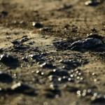 Oil spill off California coast leaves wildlife dead, popular beaches closed 💥👩👩💥