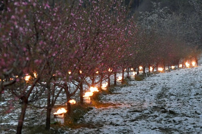 This Spring saw a late frost ravage French vineyards and orchards