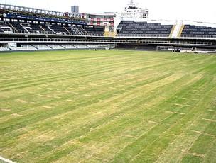 novo gramado da Vila Belmiro