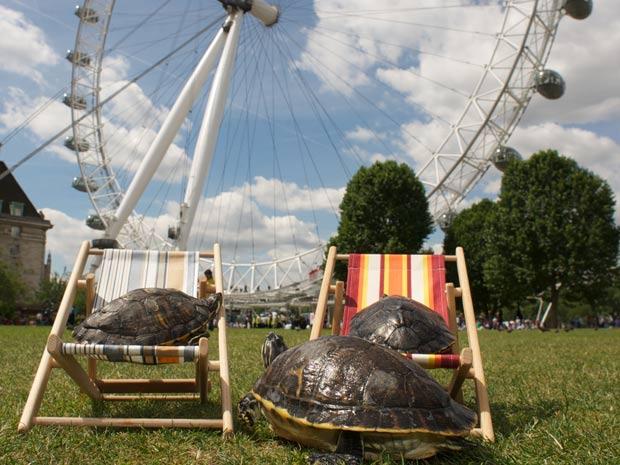 Animais tomam sol no Jubilee Garden, em Londres