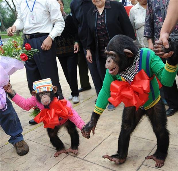 Cerimônia foi realizada nesta terça-feira no zoológico em Hefei.