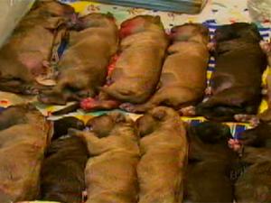 Os dezoito filhotes ficaram em uma encubadora, apenas um morreu (Foto: Reprodução EPTV)