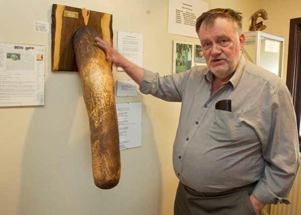 Sigurdur Hjartarson, em foto de 2008, com o pênis de elefante de sua coleção. (Foto: Bob Strong/Reuters)