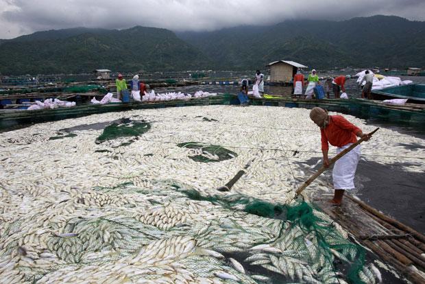 Mais de 700 toneladas de peixes morreram em um lago nas Filipinas devido ao aumento da temperatura da água provocada pela atividade do vulcão Taal, informaram neste domingo fontes oficiais (Foto: Erik de Castro/Reuters)