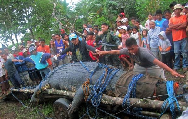 Foram necessárias 4 pessoas com as mãos esticadas para alcançar o tamanho do réptil. (Foto: Reuters)