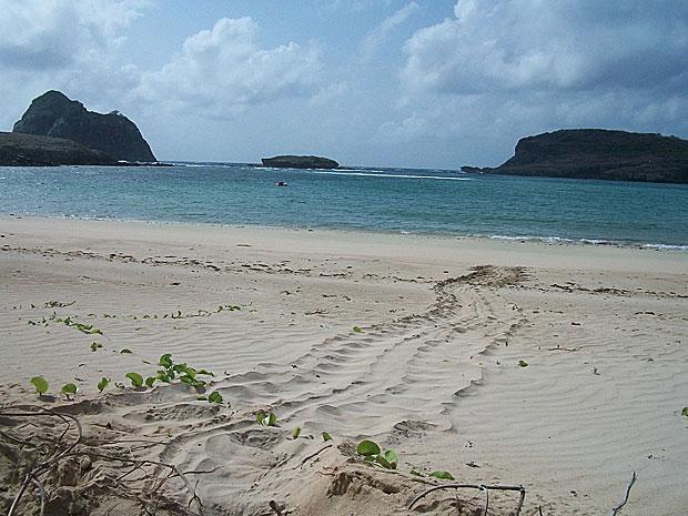 Rastro de desova de tartaruga verde na Baía do Sueste, em Fernando de Noronha (Foto: Divulgação / Projeto Tamar)