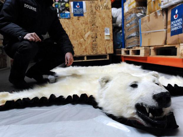 Natureza  Tapetes de urso polar e de puma so apreendidos